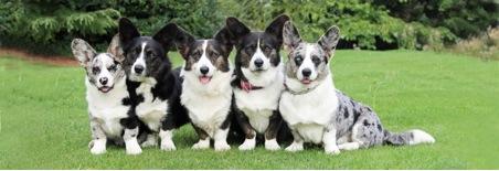 Vivien Saunders' dogs